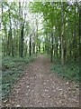SX5254 : Path to Saltram House from Stag Lodge by David Smith