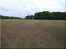 TM2089 : Field towards Bale's Plantation by JThomas