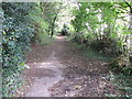 SY3493 : Path in The Spittles, National Trust woodland by David Hawgood