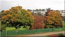 SX9065 : Autumn, Cricketfield Road by Derek Harper