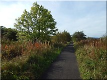 NS3074 : Cycle path above Gibshill by Lairich Rig