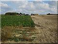 TL3242 : Crop boundary by Hugh Venables