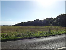 TG0822 : Farmland off the B1145 Dereham Road by Geographer