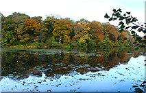 NS2209 : Swan Pond, Culzean by Billy McCrorie