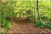 NS2209 : Woodland Path, Culzean by Billy McCrorie