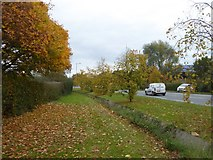 SX9289 : Autumn leaves by Bad Homburg Way by David Smith