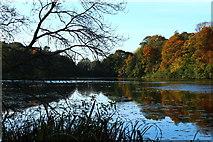 NS2209 : The Swan Pond, Culzean by Billy McCrorie