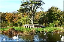 NS2209 : Duck Island, Culzean by Billy McCrorie
