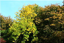 NS2209 : Trees at Culzean Country Park by Billy McCrorie