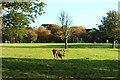 NS2310 : Deer Park, Culzean by Billy McCrorie