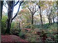 SD7011 : Woodland in Autumn by Philip Platt