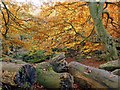 SK2579 : Autumn in Padley Gorge by Graham Hogg