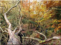 SK2579 : Autumn colour in Padley Gorge by Graham Hogg