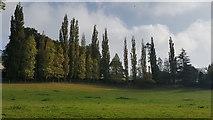 SS9512 : Tiverton : Grassy Field by Lewis Clarke