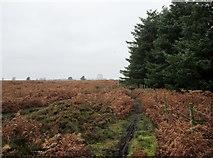 SE8696 : Bridleway  towards  RAF  Fylingdales by Martin Dawes
