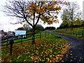 H3374 : Fallen leaves, Drumnaforbe by Kenneth  Allen