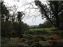 J3829 : Houses below the Donard Wood demesne wall by Eric Jones