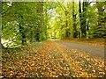 SJ8869 : Church Lane, Gawsworth by Graham Hogg