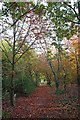 TL9503 : Autumn on the St Peters Way by Glyn Baker