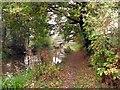 SJ8865 : Bridge #63 on the Macclesfield Canal by Graham Hogg