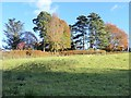 NY2522 : Hedgerow and trees on the Lingholm Estate by Oliver Dixon