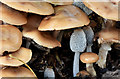 J3268 : Fungi, Minnowburn, Belfast - November 2016(2) by Albert Bridge