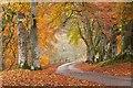 NN8870 : Autumn woods in Glen Tilt by Jim Barton