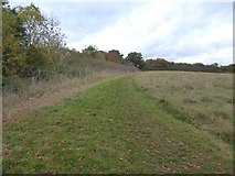 SX9491 : Permissive footpath along the Great Ridgeway field by David Smith
