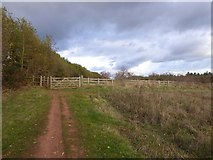 SX9490 : Footpath and field on Pynes Hill by David Smith