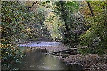 SX7489 : West Devon : The River Teign by Lewis Clarke