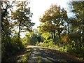 SO9245 : Woodland road in Tiddesley Wood by Philip Halling