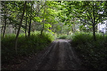 TQ5345 : Footpath, Park Wood by N Chadwick