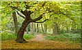 TQ4693 : Path in Chigwell Row Wood Nature Reserve by Roger Jones