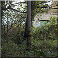 J4982 : Sewage Vent Pipe, Bangor by Rossographer