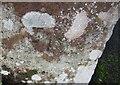 NY0703 : Ordnance Survey Cut Mark by Adrian Dust