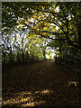 TL2015 : Bridleway to Bride Hall Lane through Stocking Springs Wood by Adrian Cable