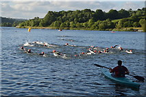 TQ3328 : Longest Day Swim, Ardingley Reservoir by N Chadwick