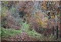 ST1990 : 'Ravens' over Raven Walk, Craig-goch by M J Roscoe