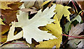 J3269 : Autumn leaves near Shaw's Bridge, Belfast - November 2016(1) by Albert Bridge