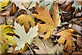 J3269 : Autumn leaves near Shaw's Bridge, Belfast - November 2016(2) by Albert Bridge