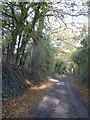 SO6053 : Farm road to Durstone Farm by Philip Halling