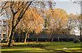 TQ2982 : St James' Gardens - November 2016 by The Carlisle Kid