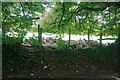 ST7582 : Sheltering sheep near Little Sodbury by Bill Boaden