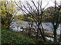 NZ1417 : River Tees by David Brown