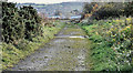 J3878 : Coastal path, Belfast harbour (November 2016) by Albert Bridge