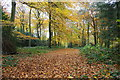 SU6487 : The Chiltern Way in Wicks Wood by Roger Templeman