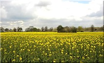 ST8180 : Farming, Acton Turville, Gloucestershire 2012 by Ray Bird