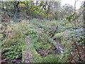 SJ8450 : Footbridge over stream in Bradwell Woods by Jonathan Hutchins