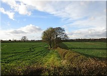 SK7474 : Field boundary off Old Moorgate by Jonathan Thacker