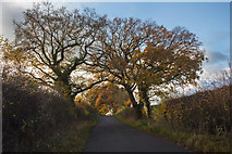 SJ3838 : Autumn, Red Hall Lane by Geraint Roberts